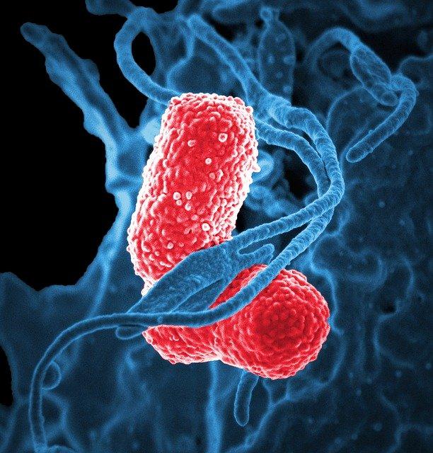 Bacterias del suelo como biofertilizantes