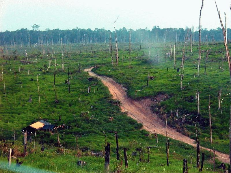 desmatamento 2