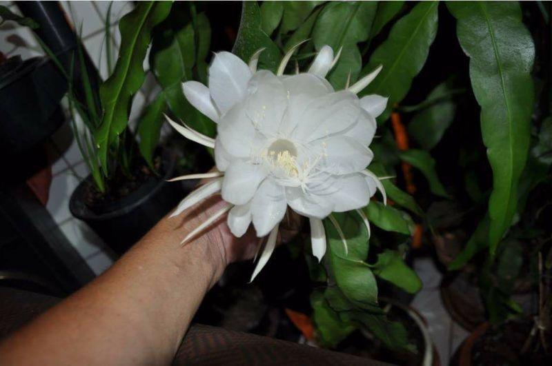 flor eliane santos