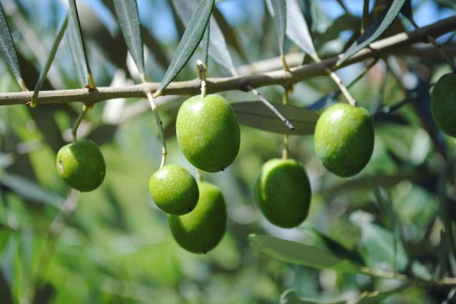 oliveira 2000