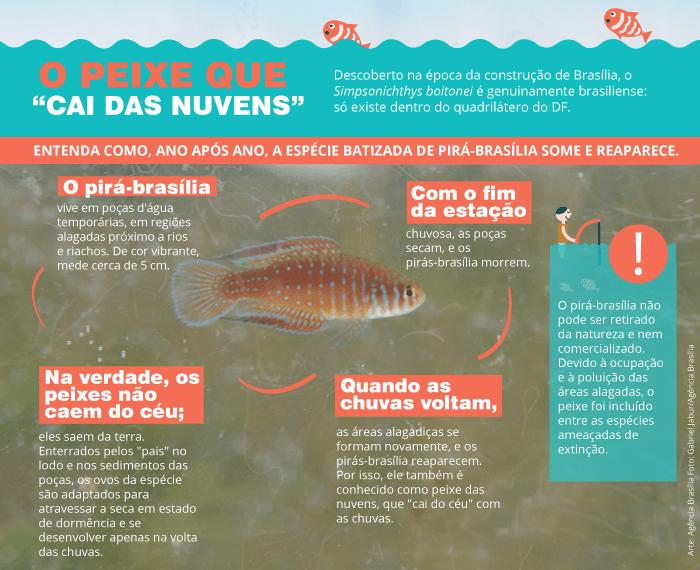 AAA arte peixe vivo