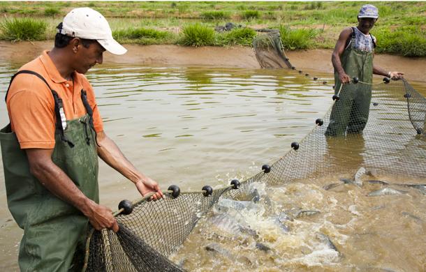 AAA criacao peixe