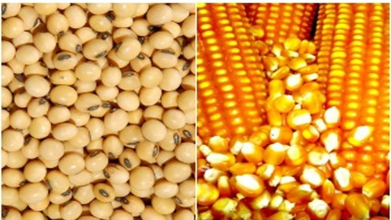AAAA soja e milho