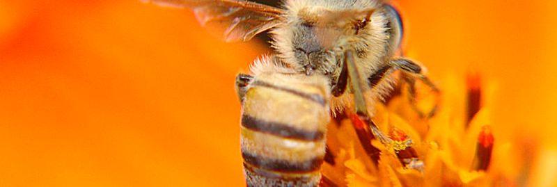 a abelhas voa 1