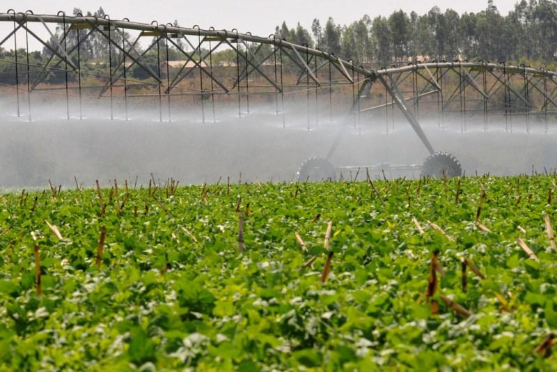 a irrigaçao