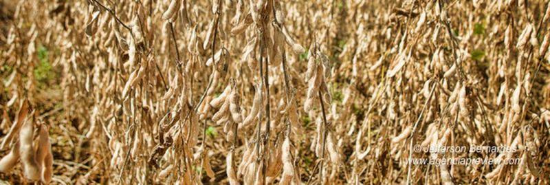 a trigo