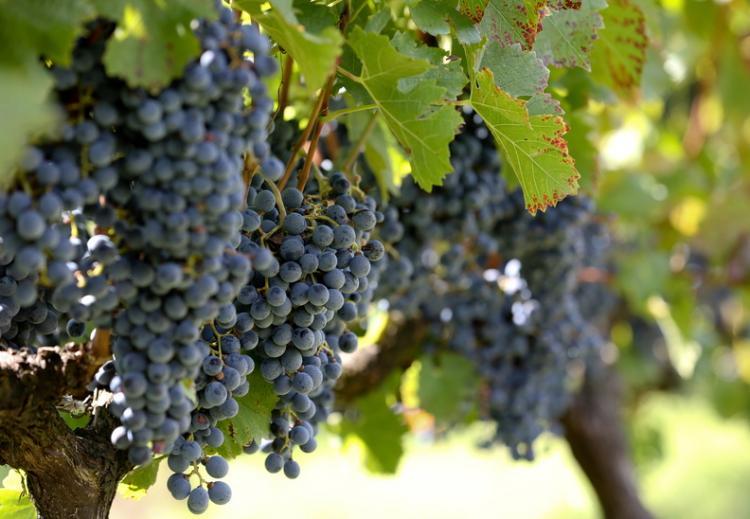 a uva