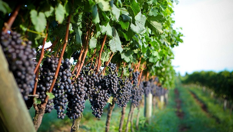 a vinhos uva