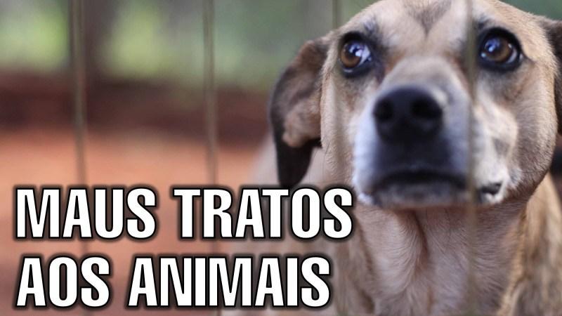 a _ maus tratos animais