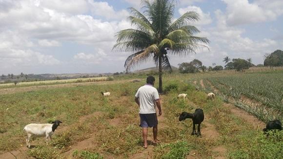 a agricultor agencia alagoas 11