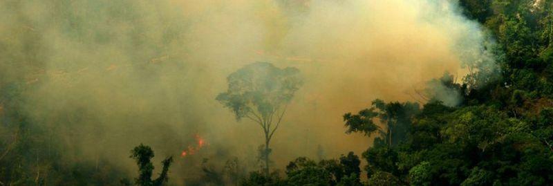 a amazonia queimadas