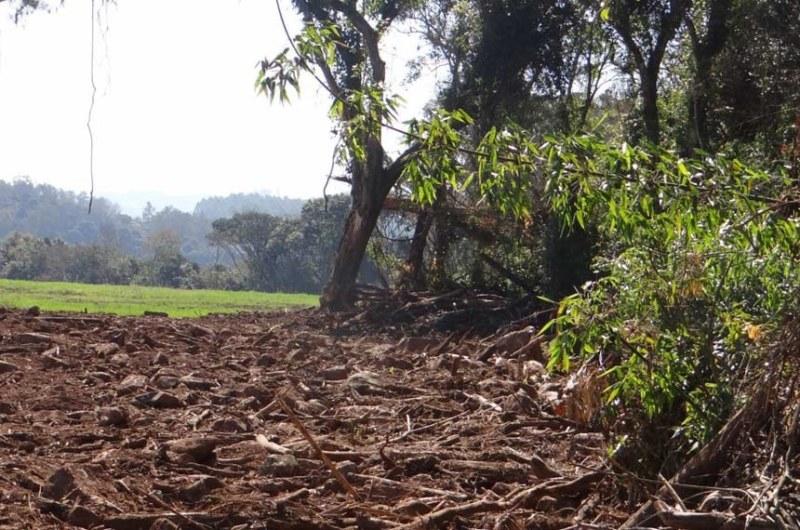 a desmatamento senado