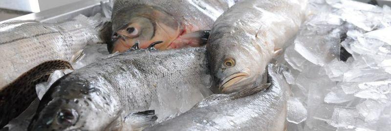 a-peixe exporta ebc