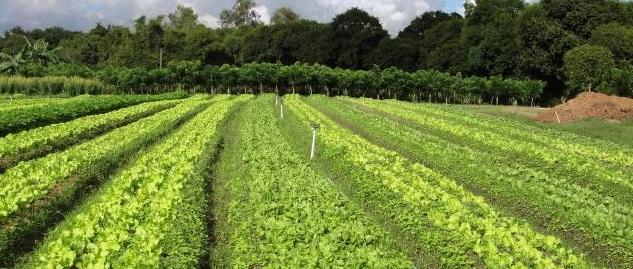 agri sustentavel