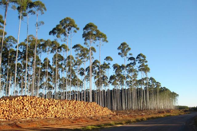florestas plantadas embrapa
