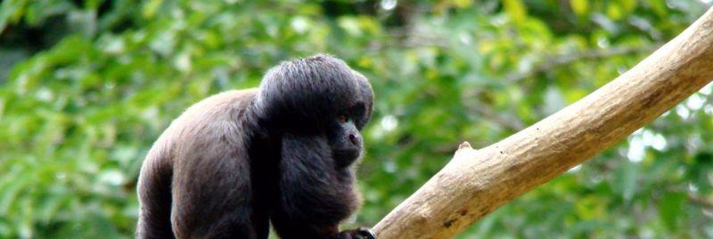 macaco-teste