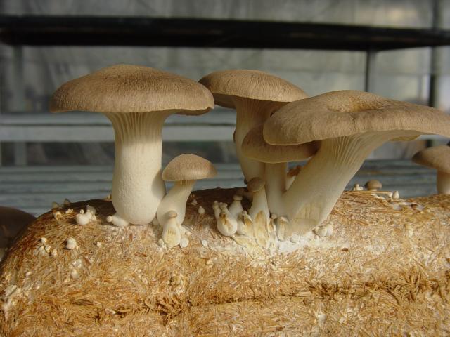 cogumelos 3