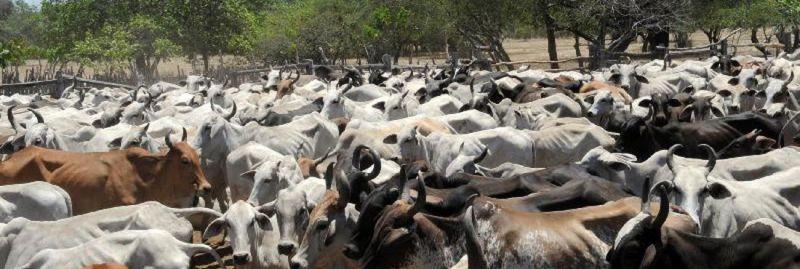 gado-abeg-ebc