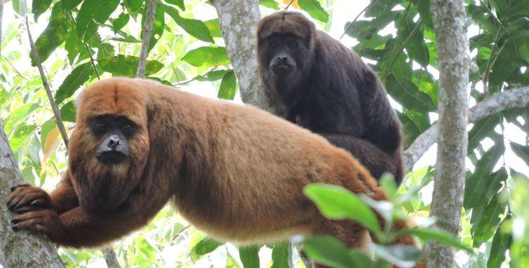 macacos-0-ebc