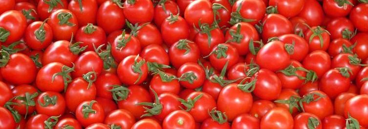 tomates 23