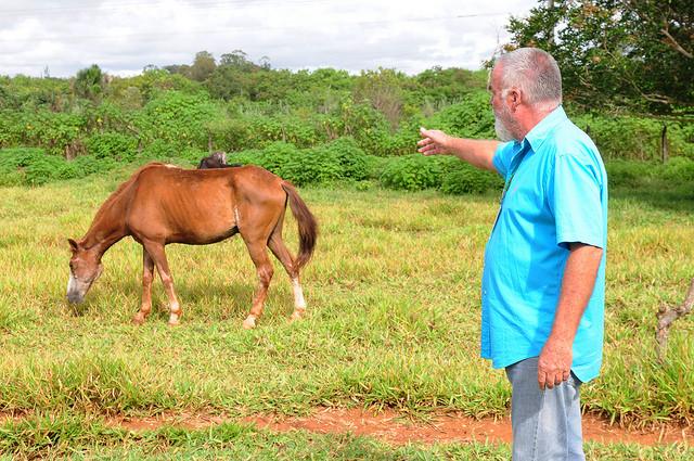 cavalos abandonados 2 denio simoes ag brasilia