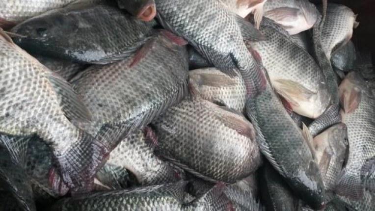 pescado 9