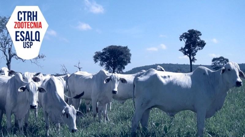bovinos esalq