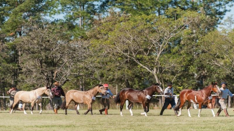 cavalos crioulos santa maria