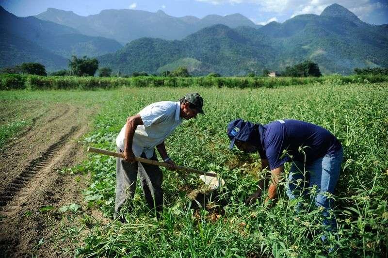agricultura familiar 13