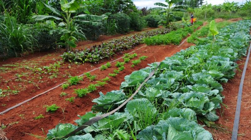 agricultura organica lavoura df