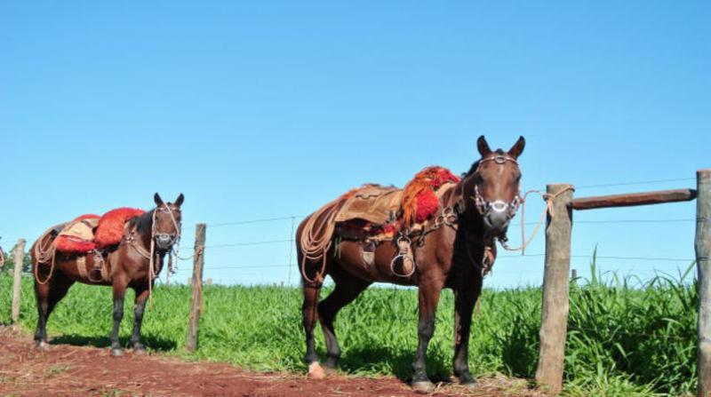 cavalos embrapa 7 6