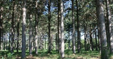 Produtos florestais já ocupam segundo lugar na pauta de exportações do agro