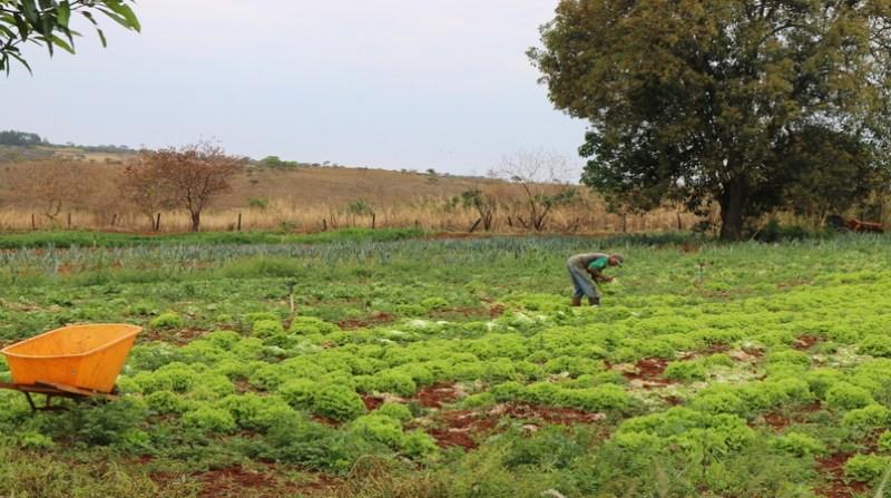 pequeno agricultor Foto Jerusia Arruda - Ascom Anater