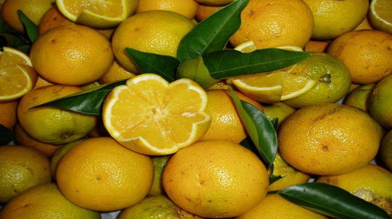 citros_13 7
