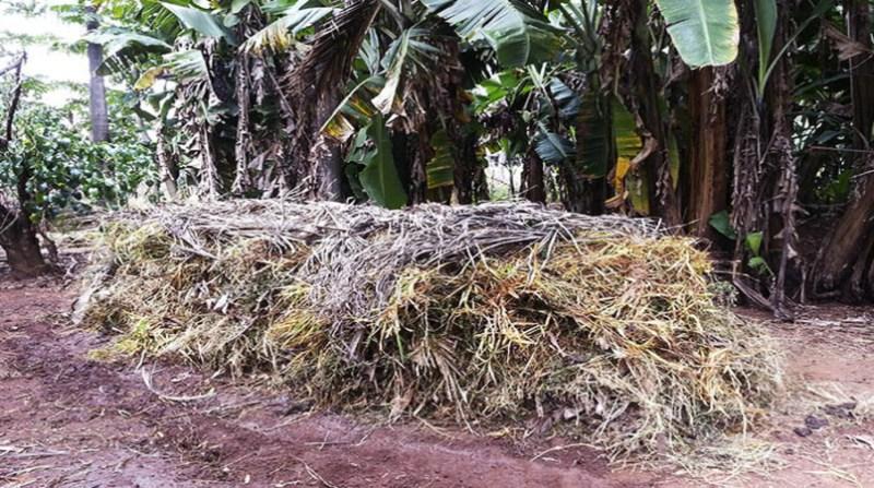 fertilizantes naturais 2