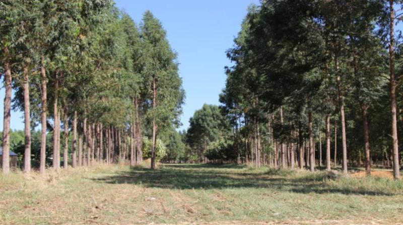 florestas plantadas 2 7 18