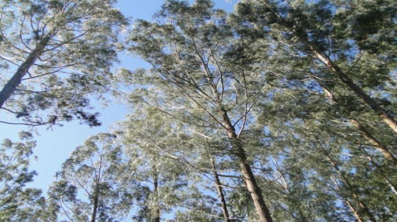 florestas plantadas 27 27 7 18