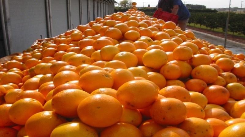 laranjas 27 07 arysta life science