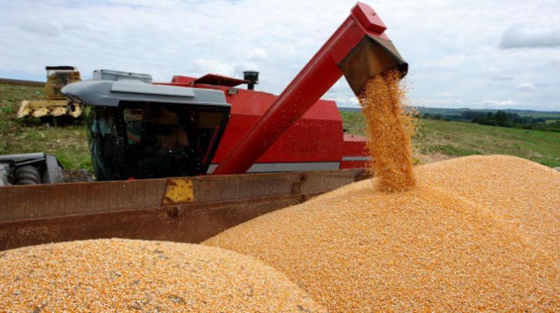 milho colheita maquina embrapa olimpio pereira de oliveira filho
