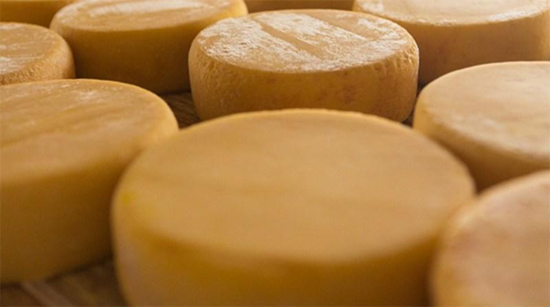 queijo canastra sebrae divulgacao