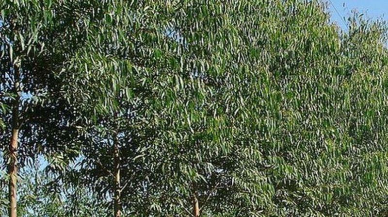 silvicultura 9 7