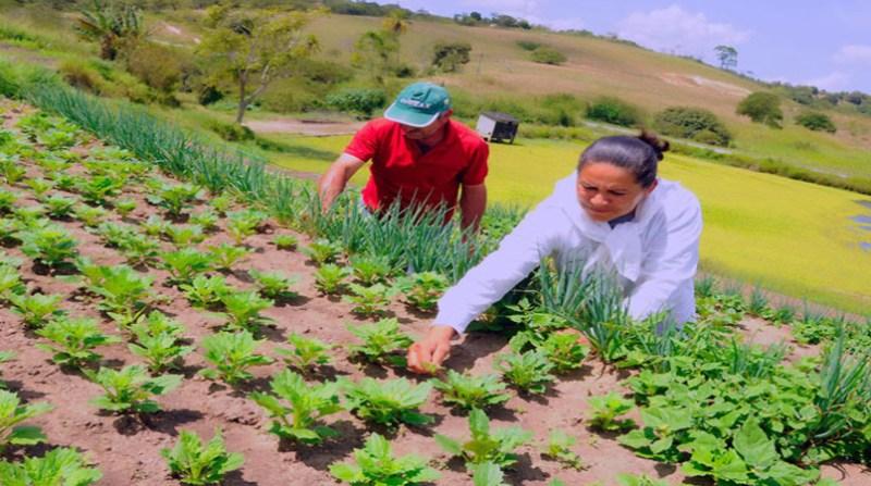 agricultores pequenos casal anater