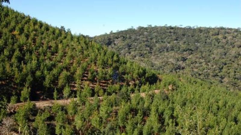 floresta 29