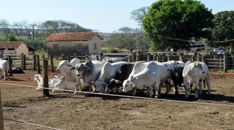 gado confinamento embrapa 29