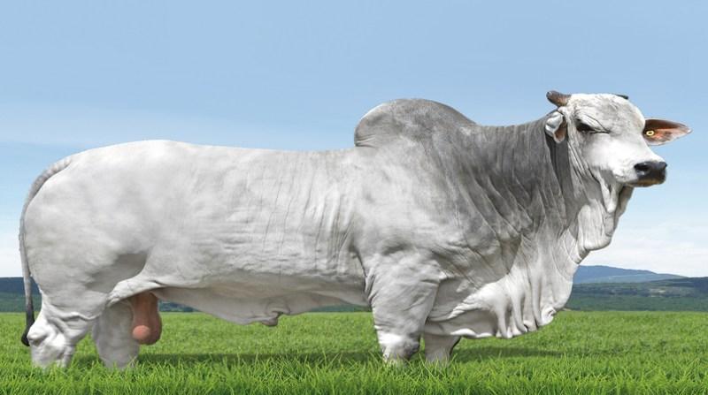touro crv lagoa - navarro