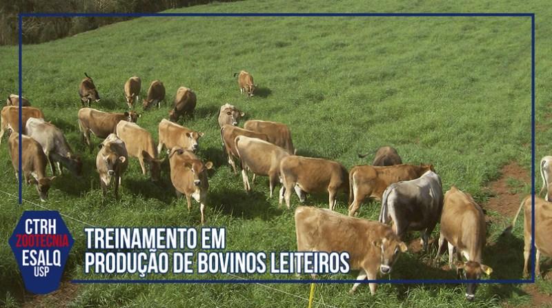 treinamento gado leiteiro