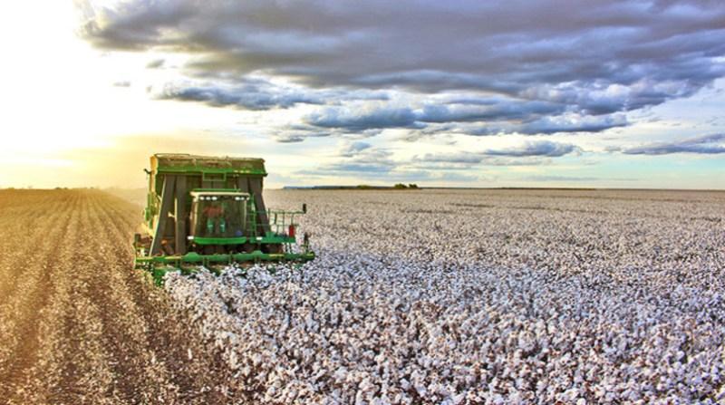 Resultado de imagem para algodão no oeste da bahia