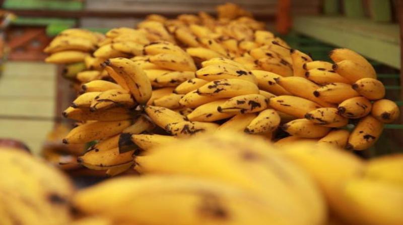 banana banana 11 9 18