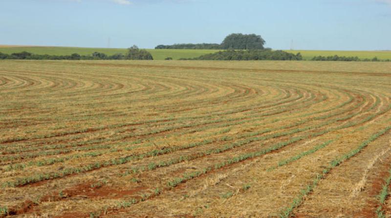 plantio milho