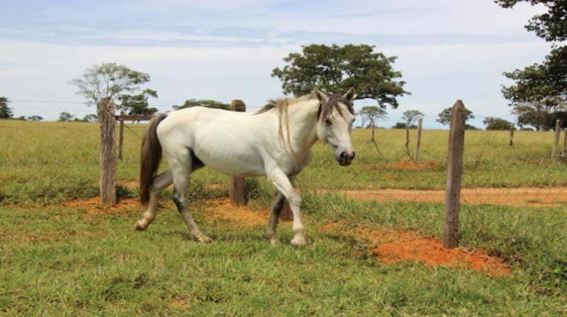 cavalo claudio melo embrapa